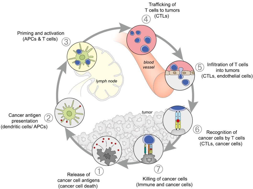 cancer-immunity cycle