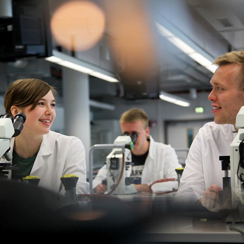 Medizinische Fakultät der TU Dresden